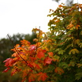 Nature Leaves 034