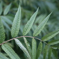 Nature Leaves 037