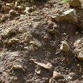 Rock Cliff 069