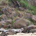 Rock Cliff 080