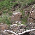 Rock Cliff 081