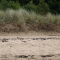 Sea Dunes 016