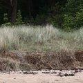 Sea Dunes 008
