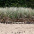 Sea Dunes 009