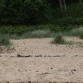 Sea Dunes 010