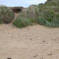 Sea Dunes 012