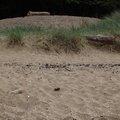 Sea Dunes 015