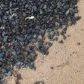 Sea Pebble 042
