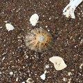 Sea Seashells 041