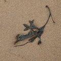 Sea Seaweed 033