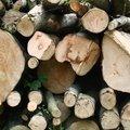 Wood Logs 008