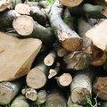 Wood Logs 009