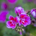 Nature Flowers 109