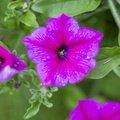Nature Flowers 110