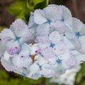 Nature Flowers 115