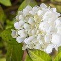 Nature Flowers 116