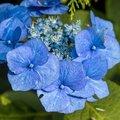 Nature Flowers 119