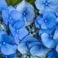 Nature Flowers 120