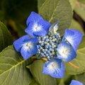 Nature Flowers 124