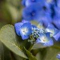 Nature Flowers 125