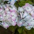Nature Flowers 130