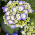 Nature Flowers 137