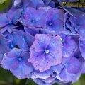 Nature Flowers 138
