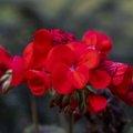 Nature Flowers 139