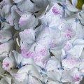 Nature Flowers 141