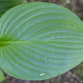 Nature Leaves 068