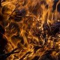 Fire 084