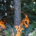 Fire 257