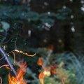 Fire 264
