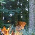 Fire 275