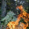 Fire 289