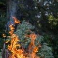 Fire 296