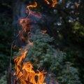 Fire 297