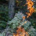 Fire 298