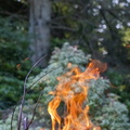 Fire 301