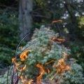 Fire 304