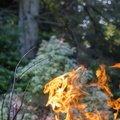 Fire 309