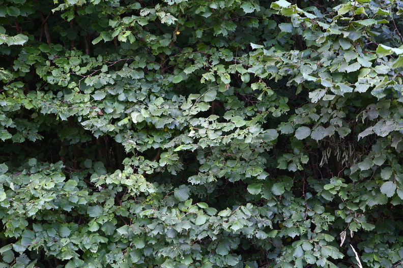 Nature_Bushes_015.JPG